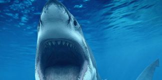 Earliest Known Shark Attack Victim Uncovered In Archaeological Dig