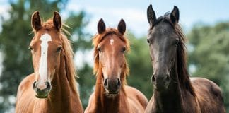 Horses Are No Longer Being Used at the Southern Border